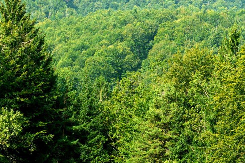 Зеленый лес дерева стоковое фото