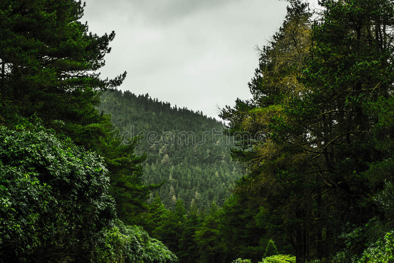 Зеленый лес, Ирландия стоковая фотография rf