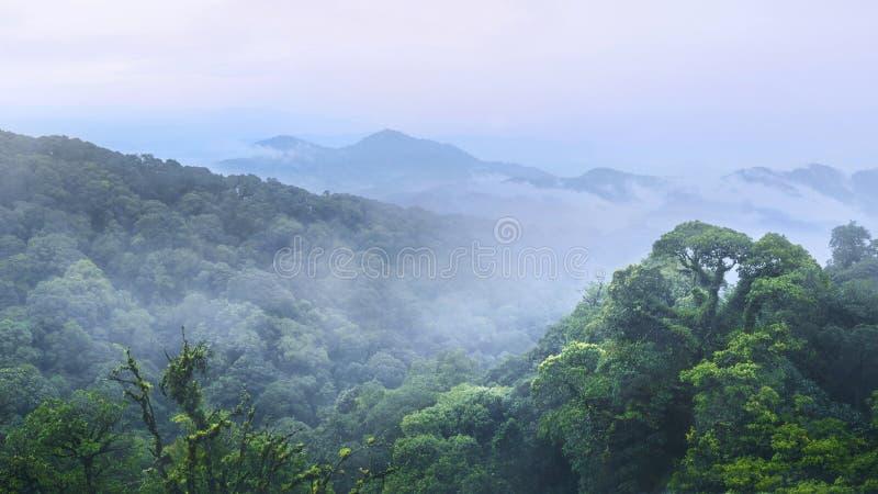 Зеленый лес и красивая гора на inthanon Chiangmai Thaila стоковые изображения rf