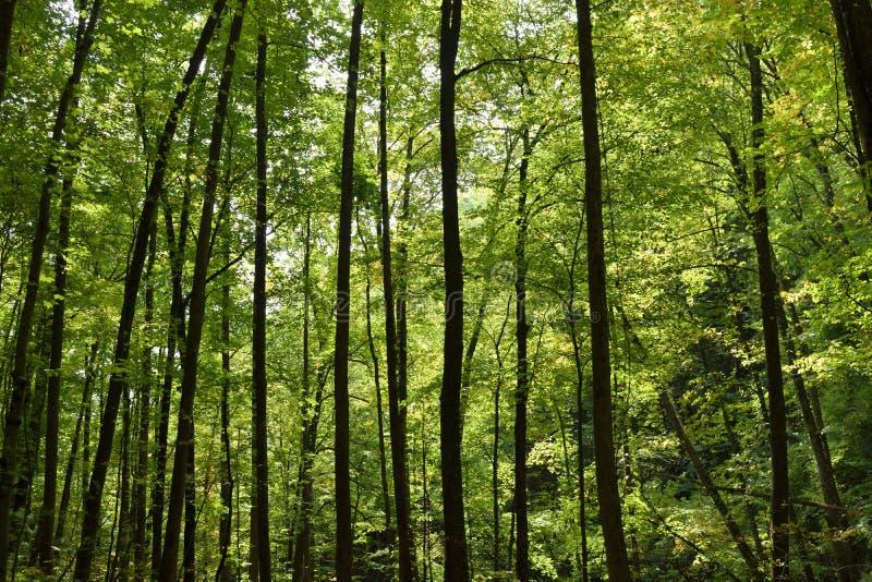 Зеленый лес, Georgia, США стоковая фотография