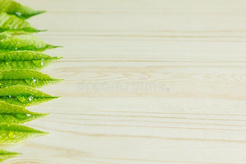Зеленый детеныш выходит на деревянную бежевую предпосылку Деревянная светлая предпосылка граница Взгляд сверху стоковое изображение rf