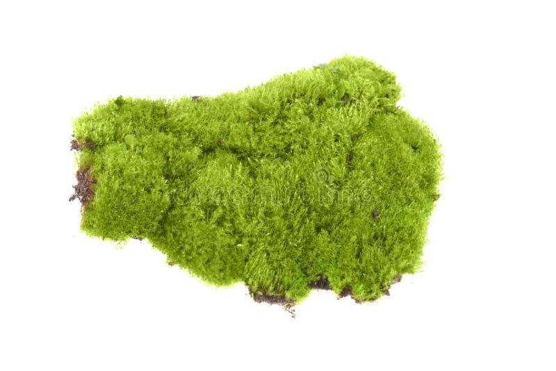 Зеленый изолированный мох стоковые фото