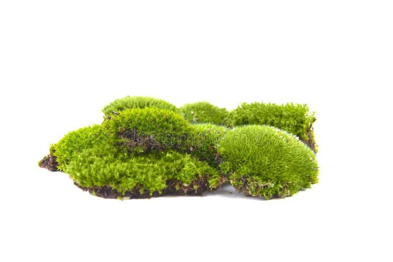 Зеленый изолированный мох стоковая фотография rf
