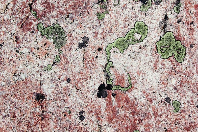 Зеленый лишайник на розовом камне гранита стоковое фото rf