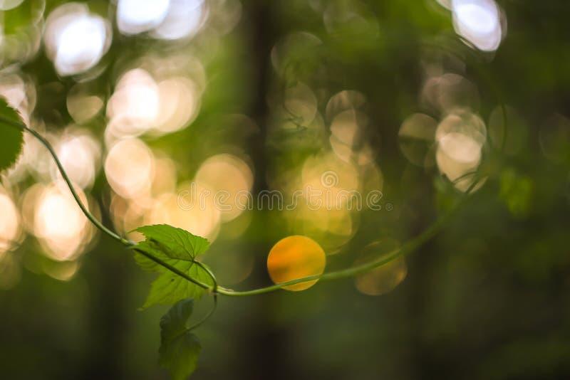 Зеленый и желтый конспект запачкал предпосылку с заводом и красивое bokeh в солнечном свете Изображение макроса с малым dept поля стоковая фотография rf