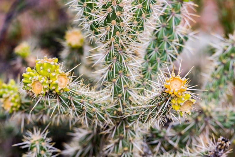 Зеленый кактус с желтыми подсказками стоковая фотография