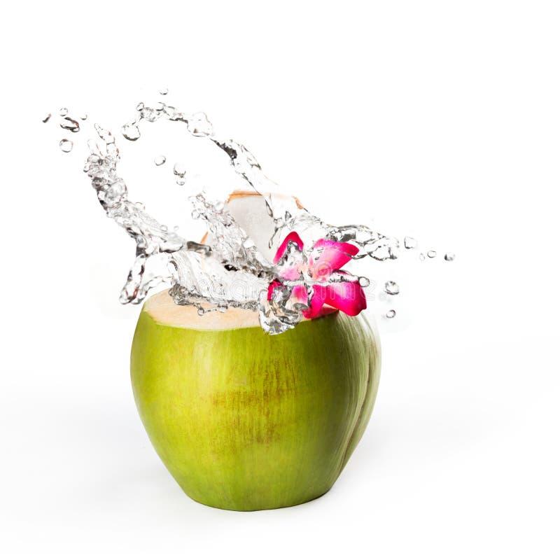 Зеленый кокос с выплеском воды стоковые изображения rf