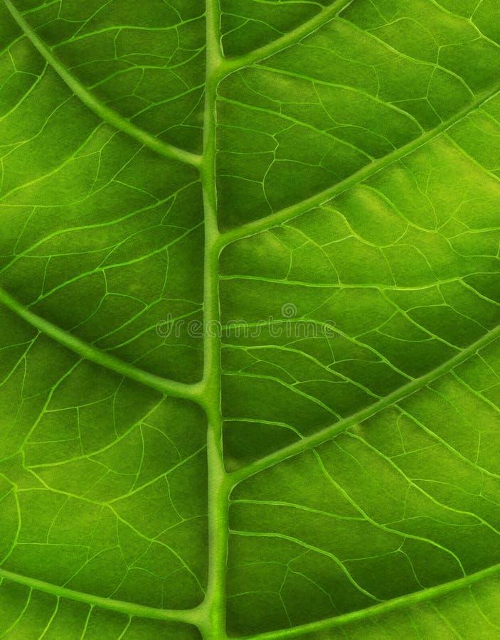 Зеленый конец-вверх лист иллюстрация штока
