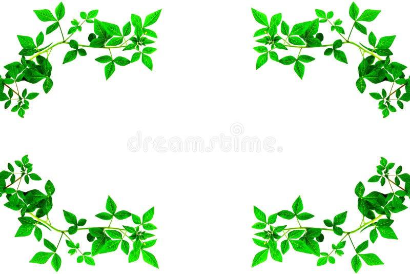 Зеленый край разрешения стоковая фотография rf