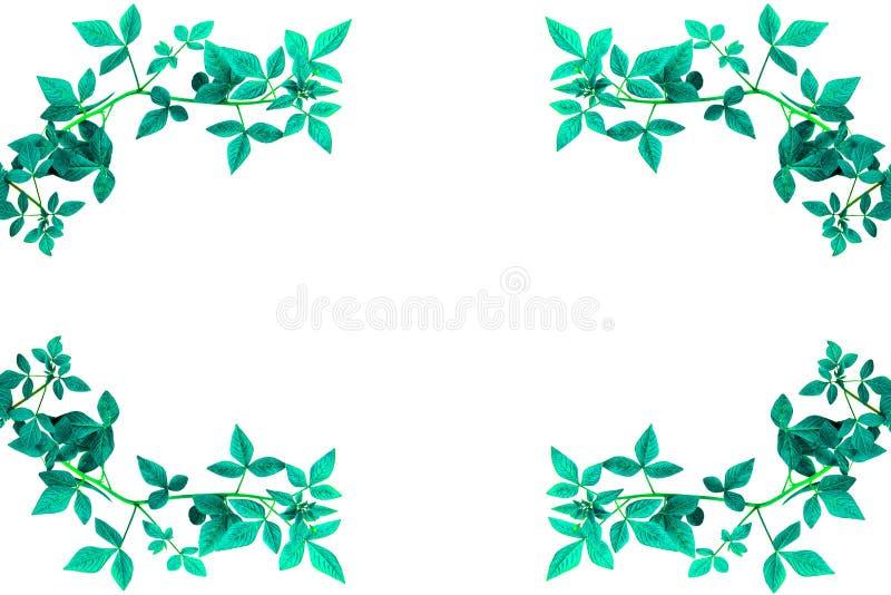Зеленый край разрешения стоковое фото