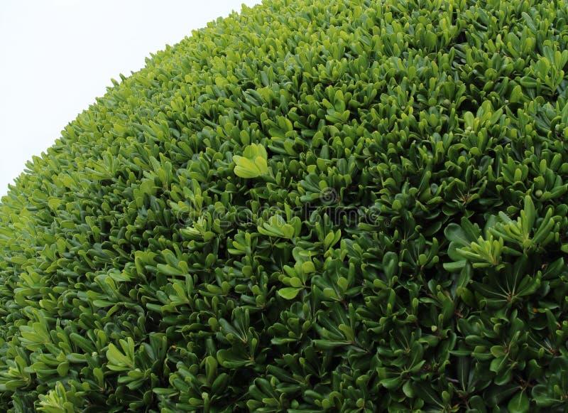 зеленый куст, завод стоковые фото