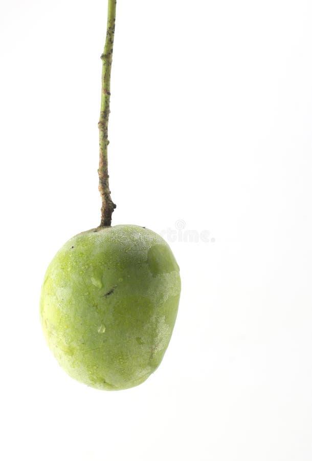 Зеленый манго изолированный на белой предпосылке стоковое изображение rf