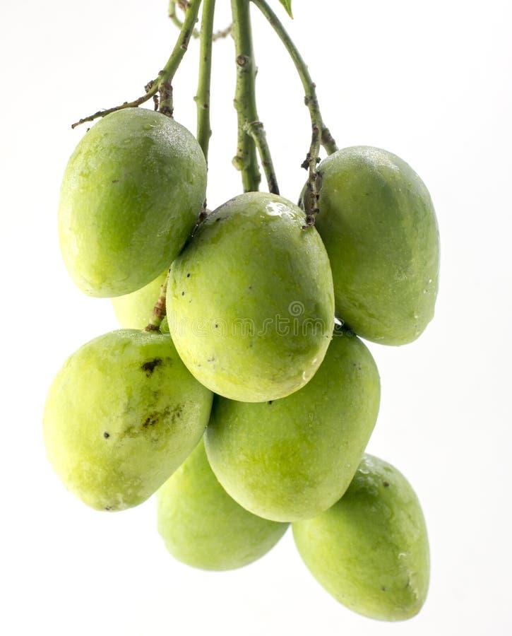 Зеленый манго изолированный на белой предпосылке стоковые фотографии rf