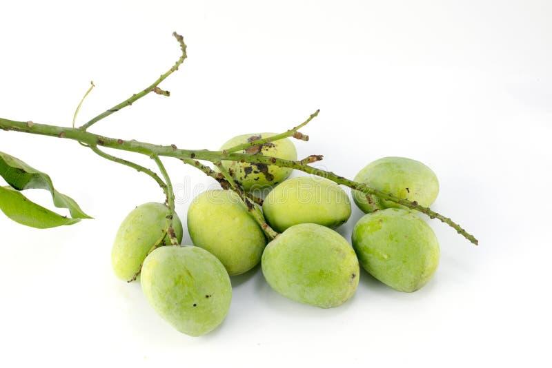 Зеленый манго изолированный на белой предпосылке стоковые изображения rf