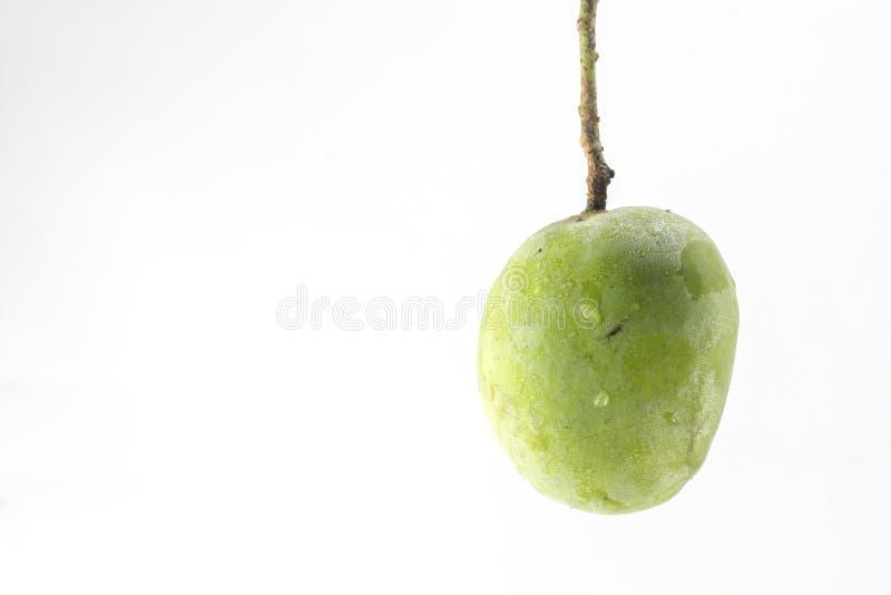 Зеленый манго изолированный на белой предпосылке стоковая фотография