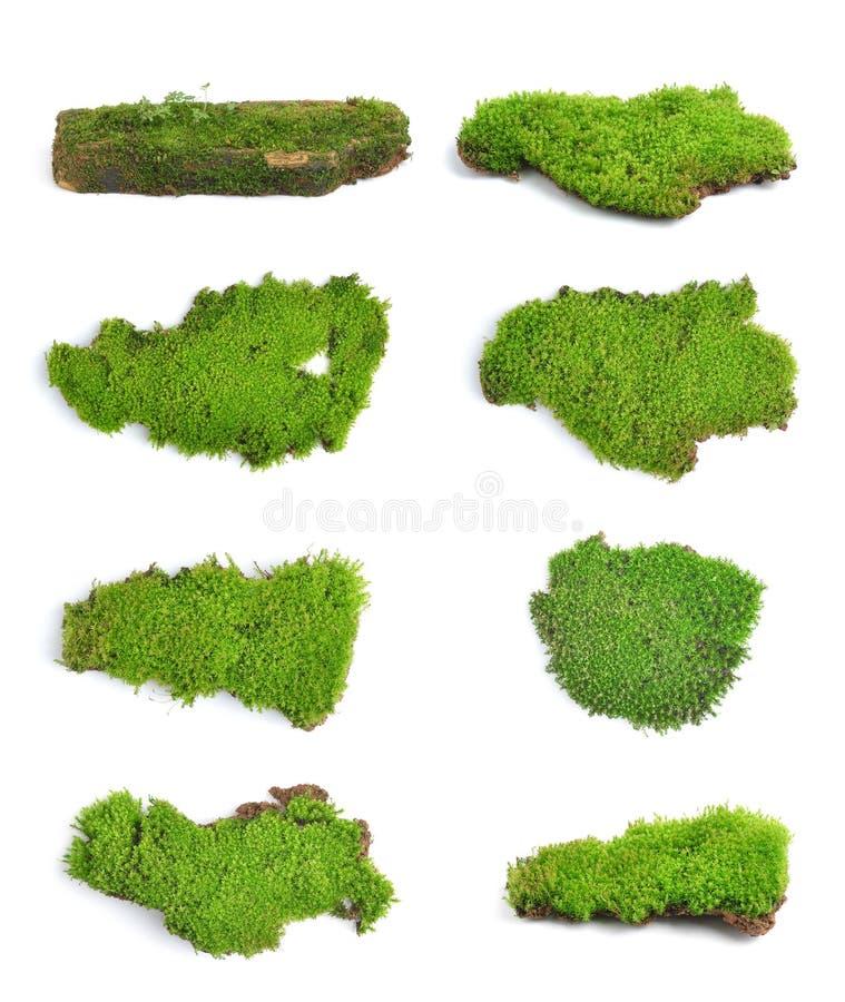 Зеленый мох на белом bakground стоковые фото