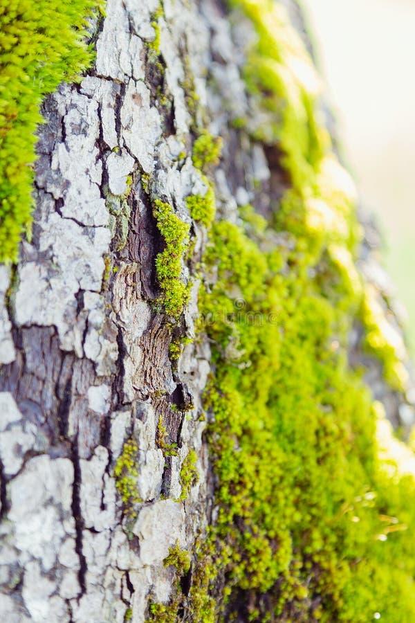 Зеленый мох на коре дерева стоковое изображение