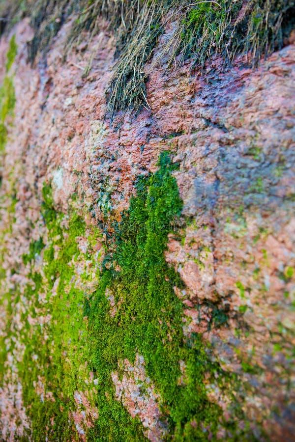 Зеленый мох на сером утесе стоковое фото