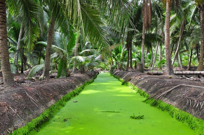 Зеленый несовершеннолетний ряски на сточной канаве стоковые фото