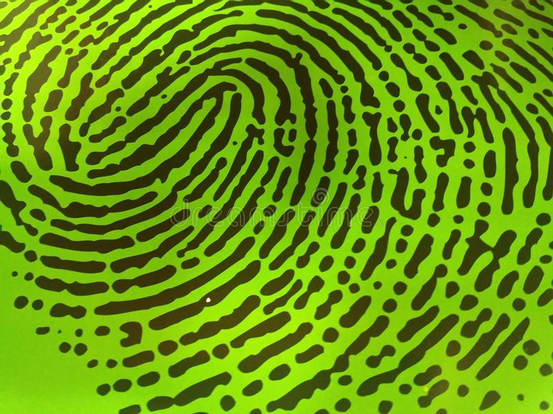 Зеленый отпечаток пальцев стоковые фотографии rf