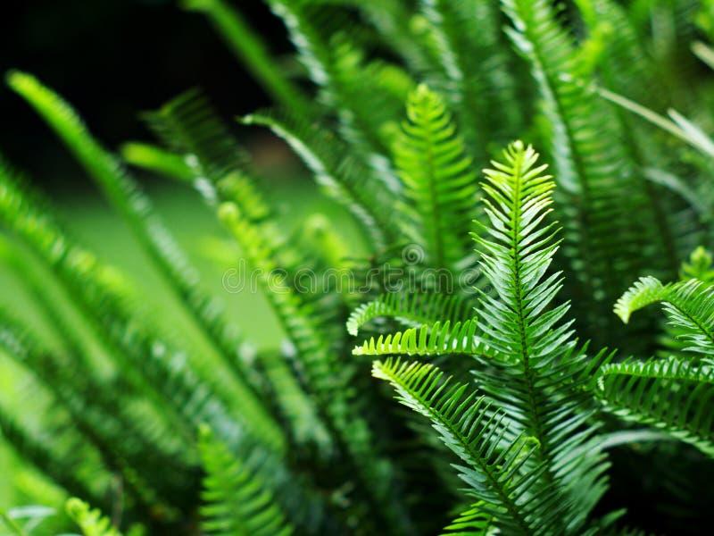 Зеленый папоротник стоковые фото
