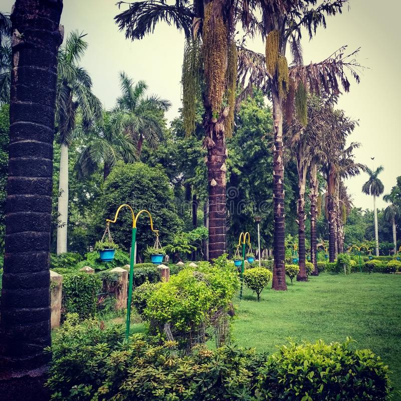 Зеленый парк стоковые фото
