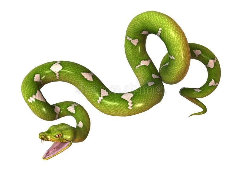Зеленый питон дерева на белизне бесплатная иллюстрация