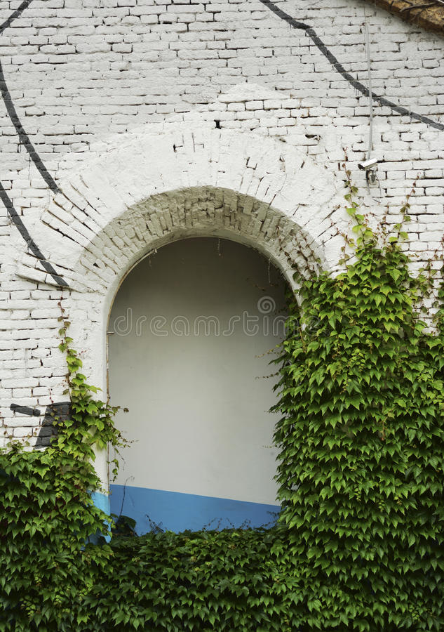 Зеленый плющ на старом здании с отверстием свода стоковая фотография