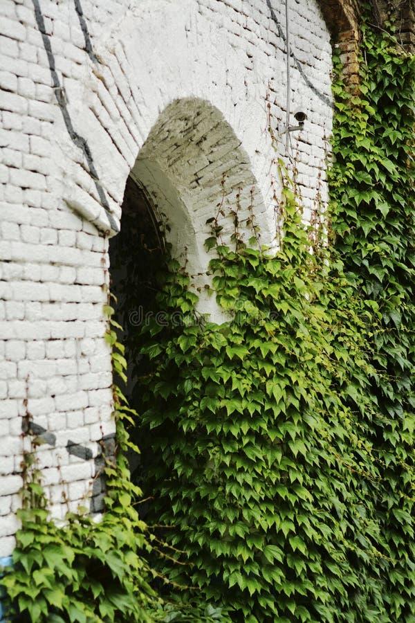 Зеленый плющ на старом здании с отверстием свода стоковые фотографии rf