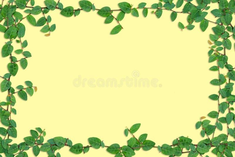 Зеленый плющ на стене бесплатная иллюстрация