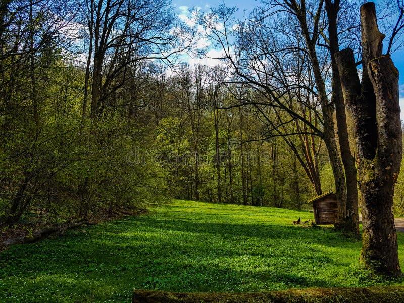 зеленый рай стоковые изображения rf