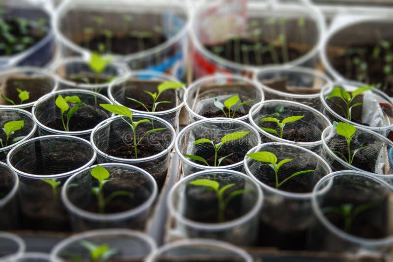 Зеленый расти саженца стоковое фото