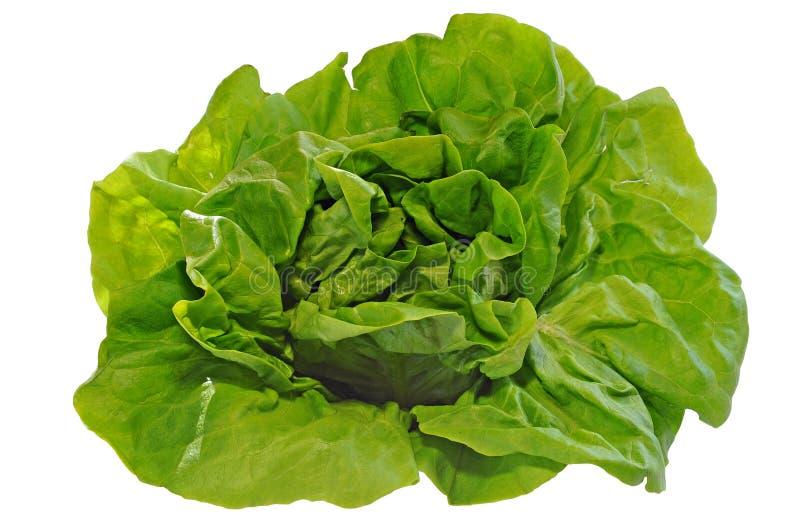 Зеленый салат, изолированный на белой предпосылке стоковые изображения rf