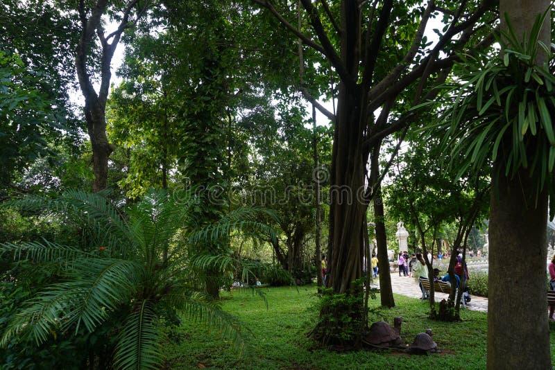 Зеленый сад в Сайгоне стоковая фотография