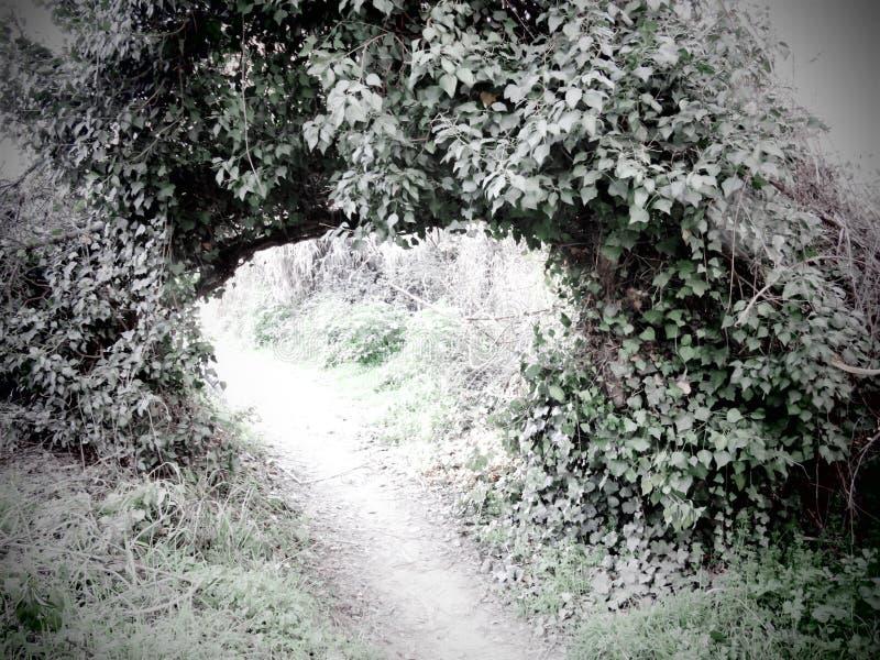 зеленый тоннель стоковые изображения rf