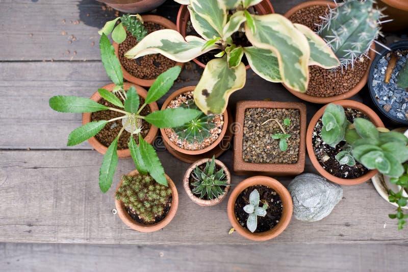 Зеленый цветок на баке вазы в саде делает чувство свежий и ослабляет стоковые фото