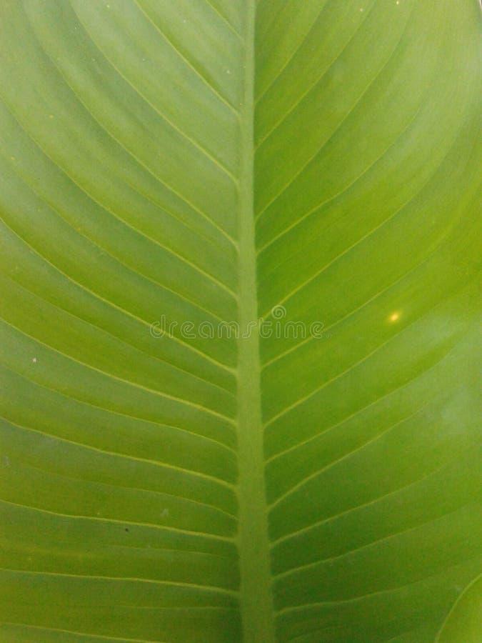 зеленый цвет выведенный к relex стоковые изображения