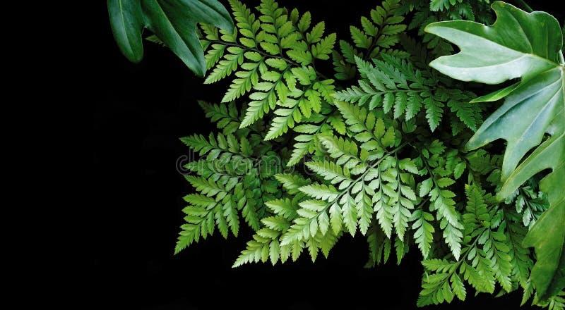 Зеленый цвет выходит на черную предпосылку, мягкий фокус, тропический лес co стоковая фотография rf