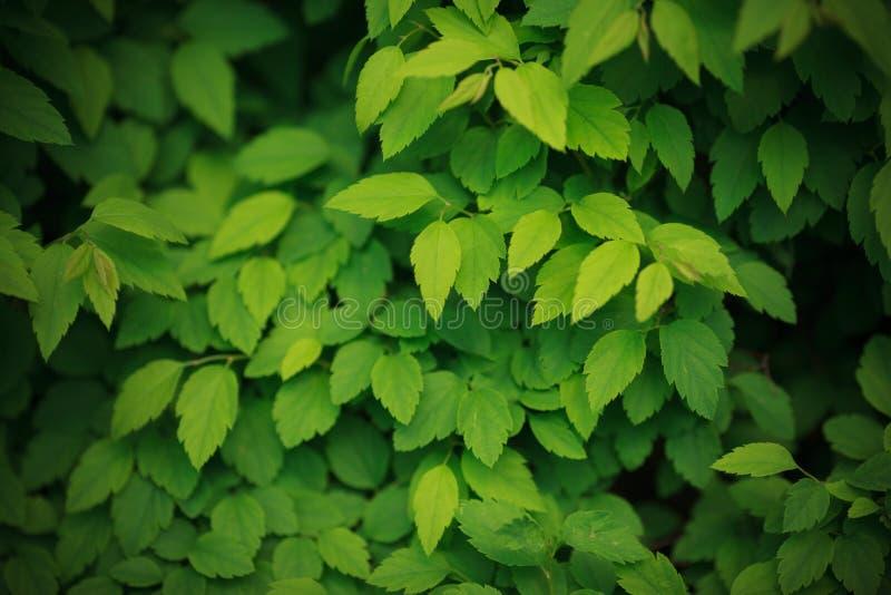 Зеленый цвет выходит предпосылка стоковые фотографии rf