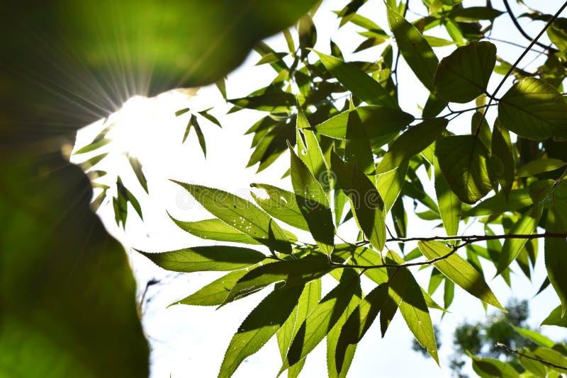 Зеленый цвет выходит природа с излишек светом солнца стоковое фото