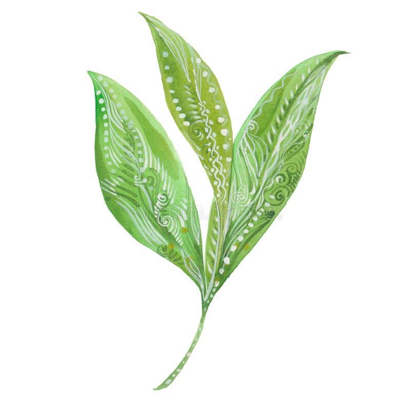 зеленый цвет выходит чай