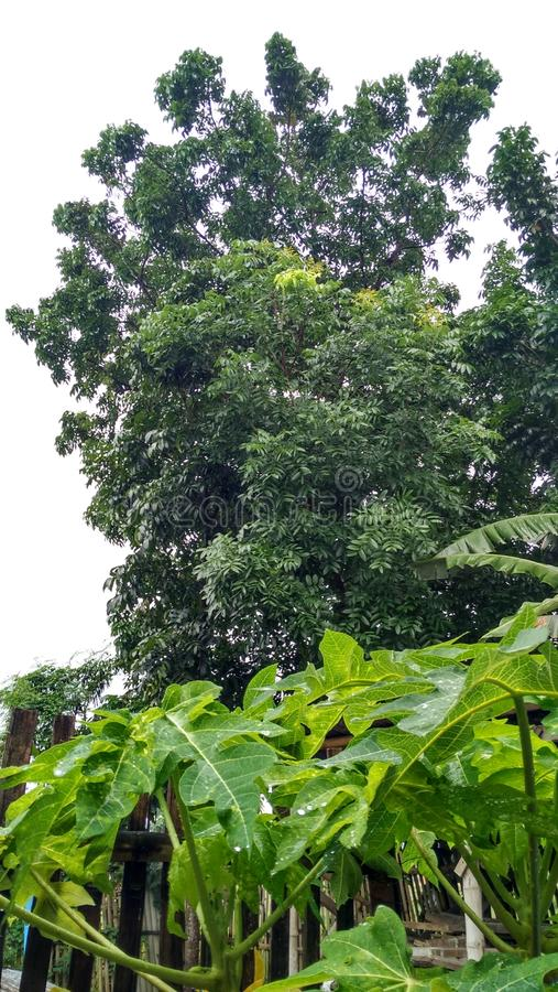 Зеленый цвет деревьев красиво стоковое изображение rf