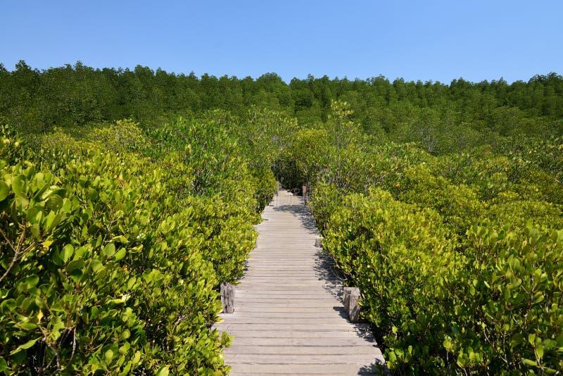 Зеленый цвет леса моста стоковое фото