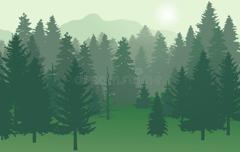 Зеленый цвет леса nr2 с солнцем стоковое фото