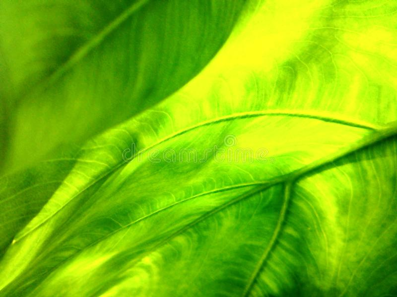 Зеленый цвет - естественный стоковое фото rf
