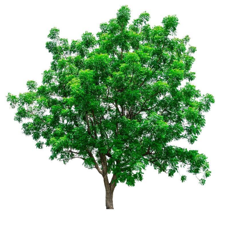 зеленый цвет изолировал вал стоковое изображение rf