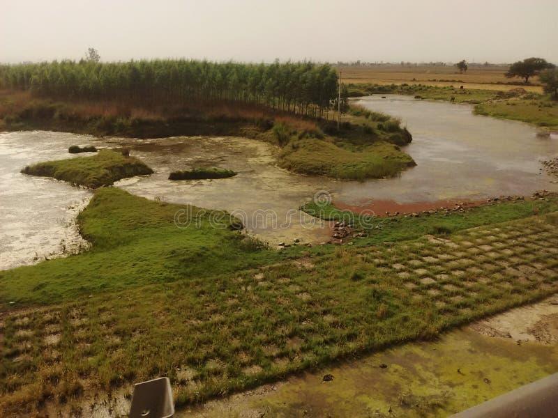 Зеленый цвет Индия ландшафта реки стоковое изображение