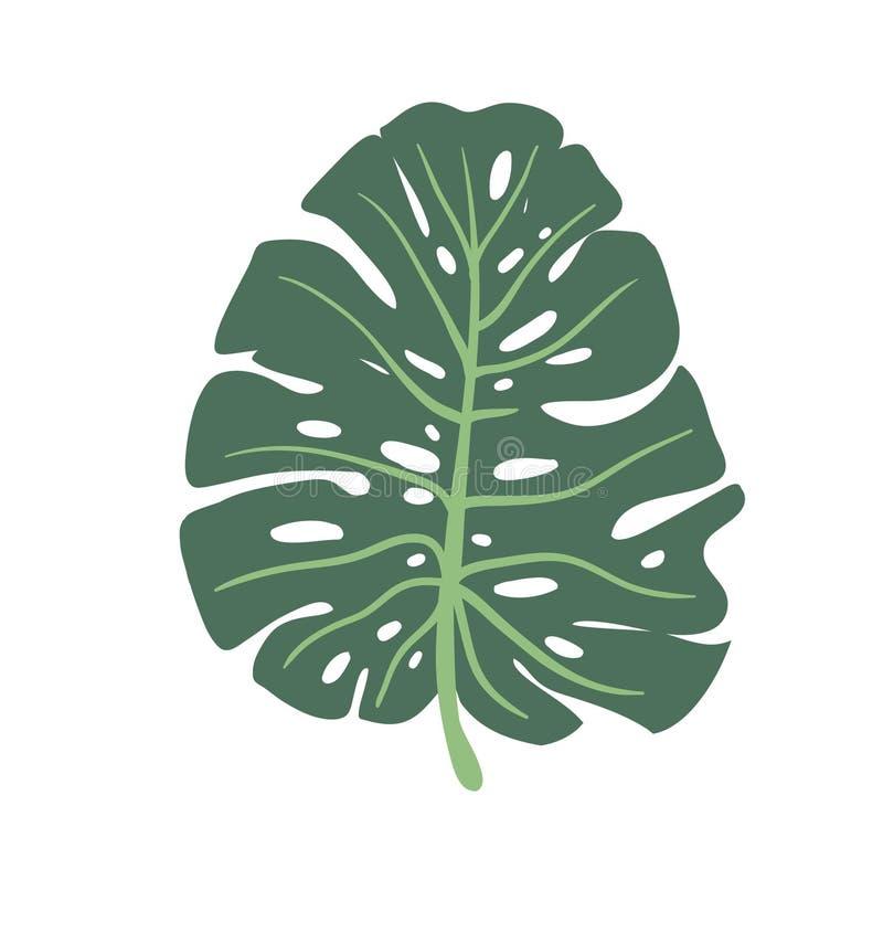 Зеленый цвет лист Monstera изолированный на белой предпосылке Лист нарисованные рукой большие тропического завода также вектор ил иллюстрация вектора