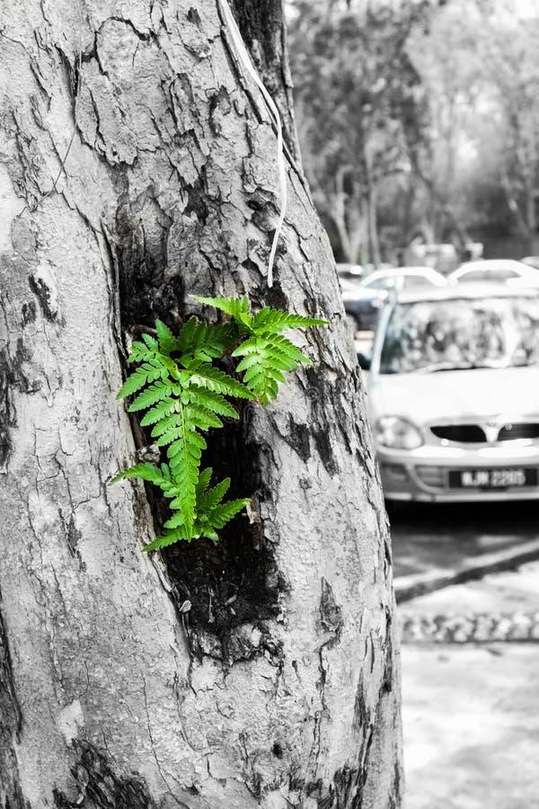 Зеленый цвет на всю жизнь стоковое изображение rf