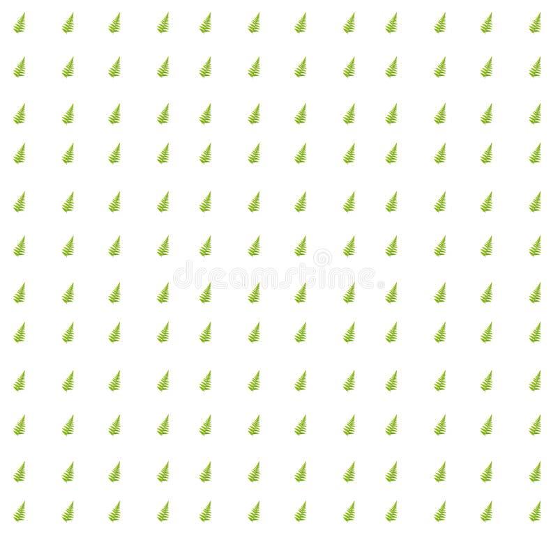 Зеленый цвет папоротника выходит текстура стоковые фото